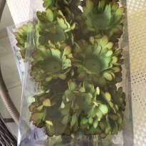 Kit com duas caixas de forminhas de papel verdes lacradas -  - Não informada