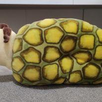 Travesseiro - Tartaruga -  - Outras